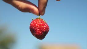农夫显示与一个播种的计划的红色草莓反对天空蔚蓝 花匠收集成熟莓果 农夫展示 股票录像