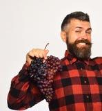 农夫显示他的收获葡萄酒酿造和秋天庄稼概念 免版税库存图片