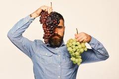 农夫显示他的有严肃的面孔的收获种葡萄并酿酒的人 图库摄影