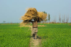农夫有同情心的草 免版税库存照片