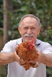 农夫母鸡 库存照片