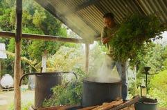 农夫生产香叶油在列斯Palmistes,雷乌尼翁冰岛,法国 免版税库存图片