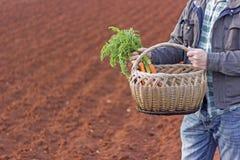 农夫用新鲜的红萝卜和秸杆篮子 图库摄影