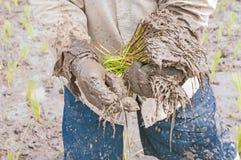 农夫的手 免版税图库摄影