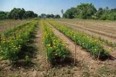 农夫的花园 库存图片
