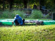农夫种植在剧情的幼木 前面是绿草 后面是耕种的一个池塘 免版税库存照片