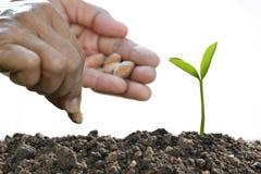 农夫种植在土壤的` s手一颗种子 库存照片