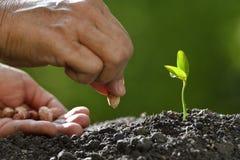 农夫种植种子的` s手 免版税库存照片