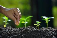农夫种植种子的` s手 免版税图库摄影