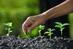 农夫种植种子的` s手 库存照片