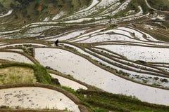 农夫种植米用老方式 图库摄影