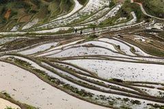 农夫种植米用老方式 免版税库存图片