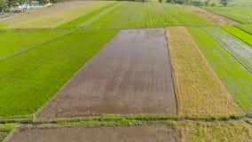 农夫种植米 股票录像