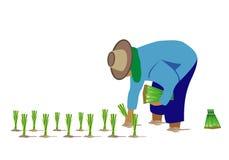 农夫移植米种子 皇族释放例证