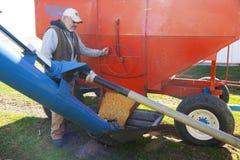 农夫装货玉米到筒仓里 免版税库存图片