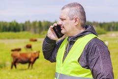 农夫谈话在手机在母牛附近在牧场地 免版税库存图片