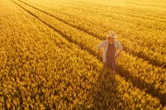 农夫身分鸟瞰图在金黄成熟麦田的 库存照片