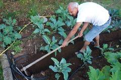 农夫运作的锄的地面菜园 免版税库存照片