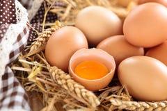 农夫鸡蛋 库存照片