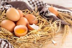 农夫鸡蛋 免版税库存图片