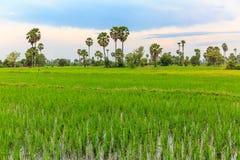 农夫`在雨季的稻田在蓝天下 图库摄影