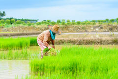 农夫移植 免版税库存图片