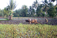 农夫 免版税库存图片
