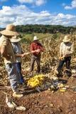 农夫 免版税图库摄影