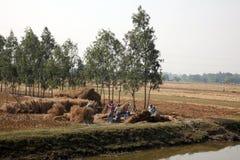 农夫havesting的米 免版税库存照片