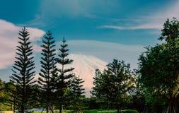 农村与松树的风景风景视图在清楚的天空下 免版税库存照片