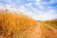 农村乡下路通过领域用麦子 免版税图库摄影