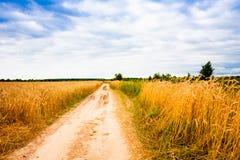 农村乡下路通过领域用麦子 库存照片