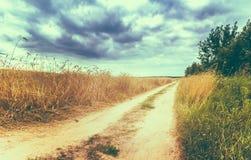 农村乡下路通过领域用麦子 免版税库存图片