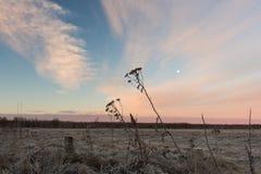 农村俄国乡下早晨 在多雪的领域的美好的桃红色日出 免版税库存照片