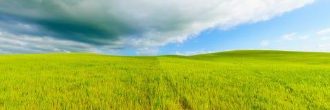 农村全景背景,滚动小山和绿色领域环境美化,托斯卡纳,意大利。 免版税库存照片