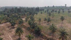 农村农业果子领域鸟瞰图和金虎尾树丛、可可椰子和农舍 影视素材