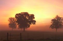 农村农厂日出或日落与家畜操刀 库存图片
