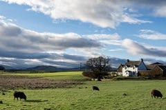 农村农舍在苏格兰 库存图片