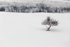 农村冬日风景 免版税图库摄影