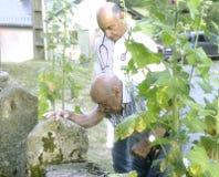 农村医生伴随他的住宅的患者在蜀葵后灌木的一个土气设置  免版税库存图片