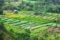 农村印度的横向 库存照片