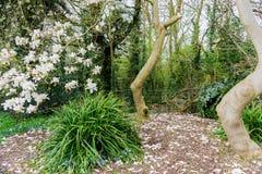 农村场面在一个公园在乡下在英国 免版税库存照片