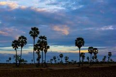 农村场面在泰国 在领域上的晚上天空 免版税库存图片