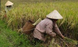 农村场面越南 免版税图库摄影