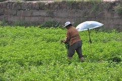 农村妇女被采摘的蔬菜 图库摄影