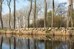 农村富兰德在比利时 免版税库存照片