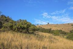 农村干燥冬天植被蓝色多云天空原野大局 免版税库存照片