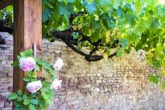 农村托斯卡纳的美好的美丽如画的角落,有植物和花的 库存图片