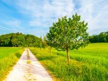 农村捷克的横向 在乡下公路旁边的绿色叶茂盛树 有田园诗的地方休息 免版税库存照片