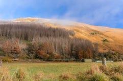 农村新西兰在Moke湖附近的秋天 图库摄影
